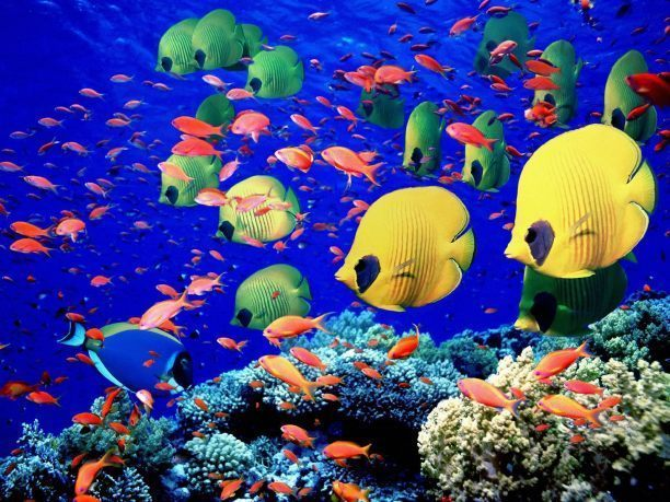 many fish sea life photo 2025069 fanpop
