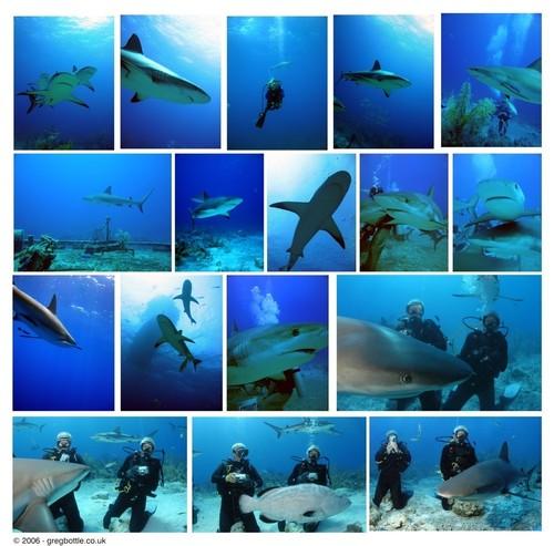 Many sharks!!!!!!<3333