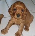 Sweet puppie