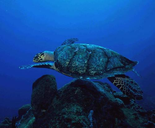 Turtle!!!!
