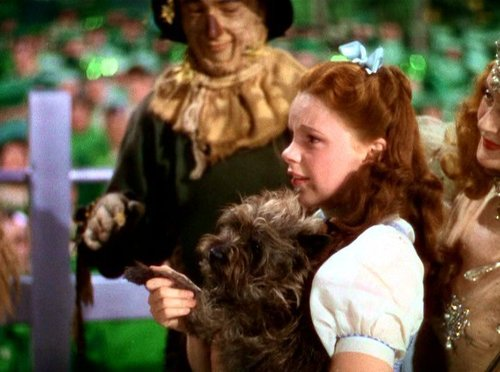 The wizard of oz images wizard of oz caps hd wallpaper and background photos 2028965 - The wizard of oz hd ...