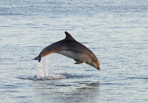 dolphin!<333