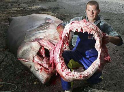 Poor, poor sharks X'[~~!!!