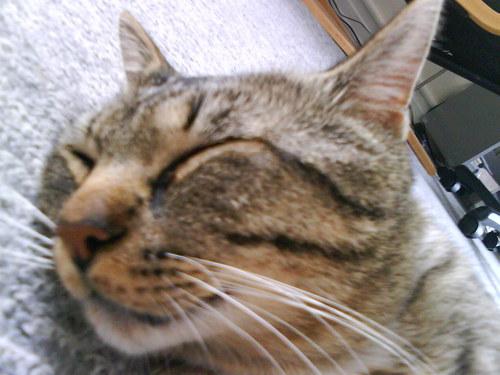 aholic's cat