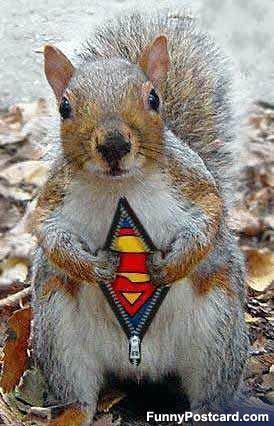 nananananana! super squirell!