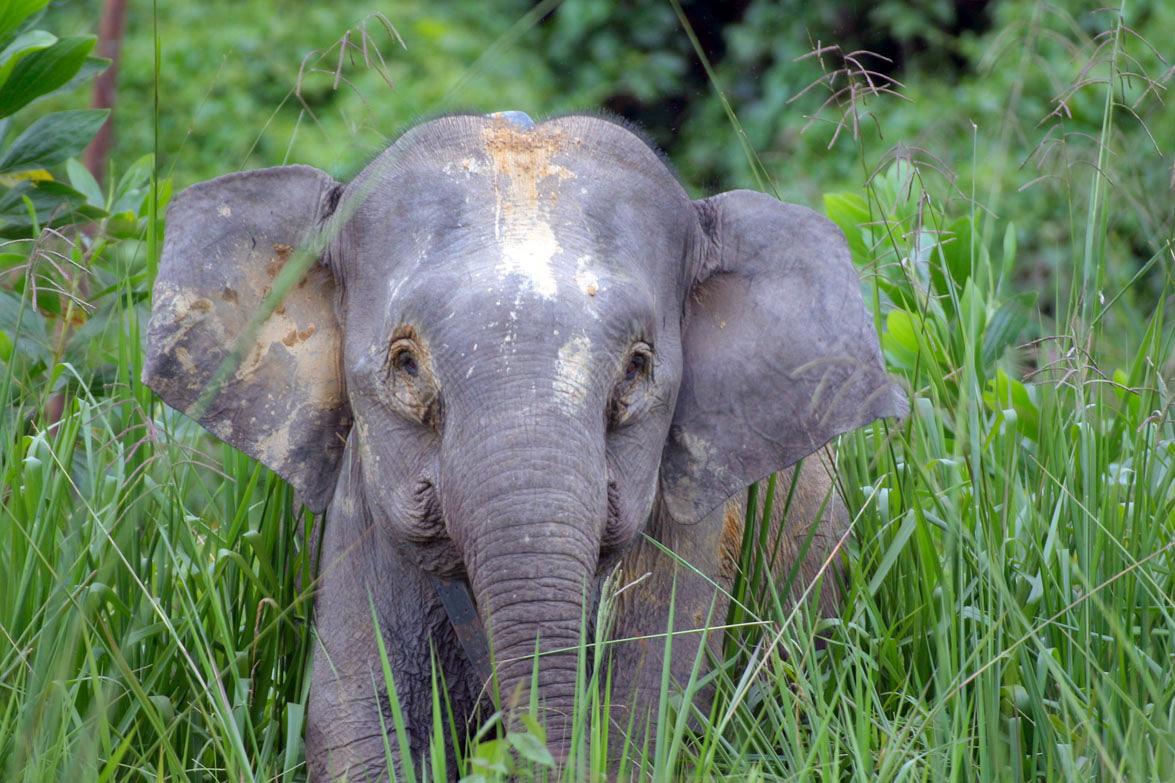 bedreigde diersoorten afrika