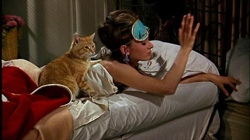 Audrey Hepburn wallpaper possibly with a cat, a kitten, and a tom called Breakfast at Tiffany's