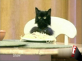 Cat Eating Spaghetti