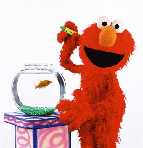 Elmo & his goldfish