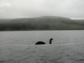 Here's Nessie! - loch-ness-monster photo