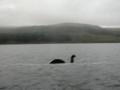 Here's Nessie!