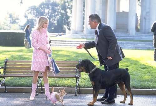 Legally Blonde hình nền probably with a rottweiler and a staffordshire bullterrier entitled Legally Blonde