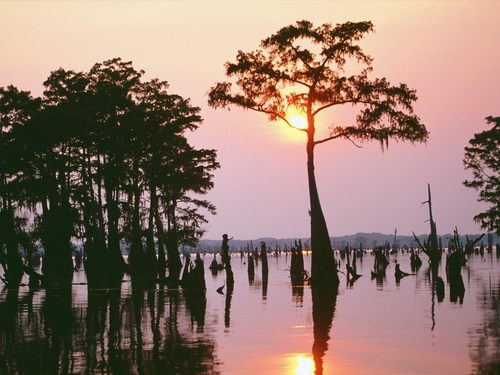 Louisiana wallpaper with a lakeside entitled Louisiana Wallpaper-Atchafalaya Bayou