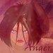 Wanda's Anger