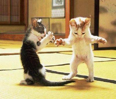 two little funny kitties