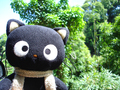 Chococat in the Woods