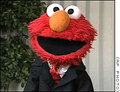 Elmo in a Suit - elmo photo