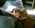 Jasper wrapped up in a newspaper