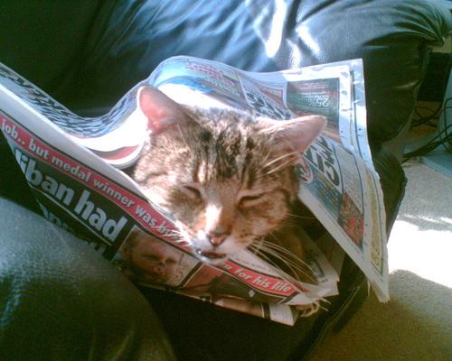 Jasper wrapped up in a newspaper