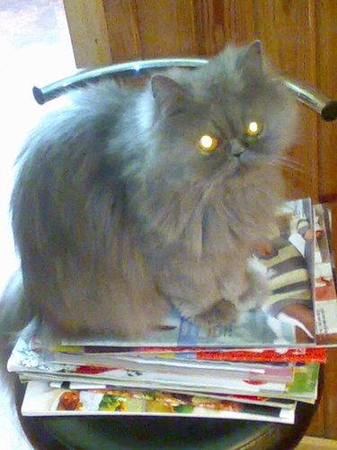 My cat Jenny;)