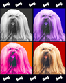 Pop Art Lhasas - lhasa-apso photo