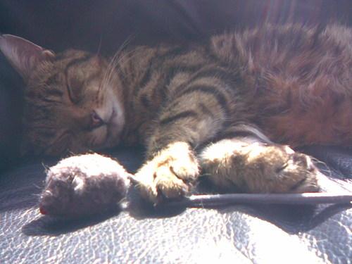 Sleepy Jasper