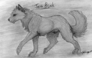 Jacob Black wallpaper titled Werewolf Jacob