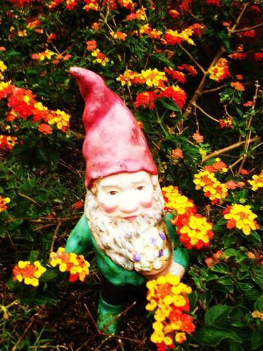 꽃 gnome