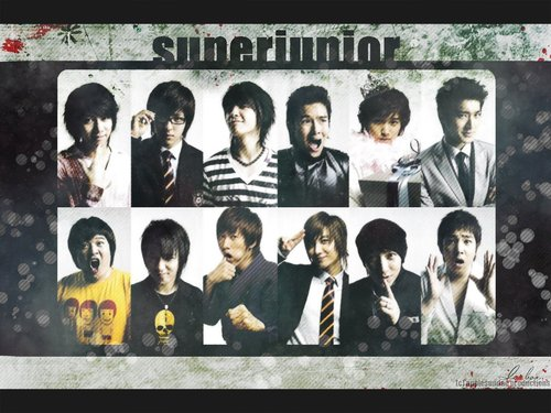 Super Junior Обои entitled super junior