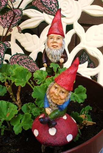 two tiny gnomes