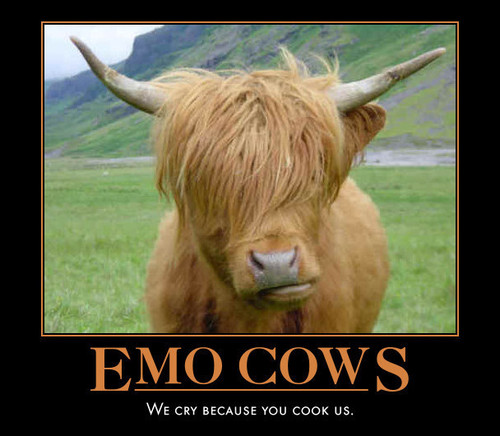 why cows are emo