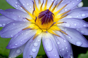 Beautiful fleur