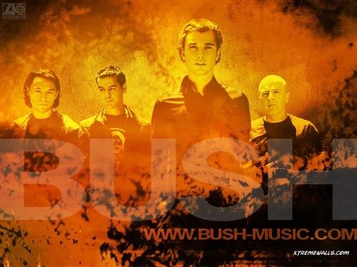 arbusto, bush