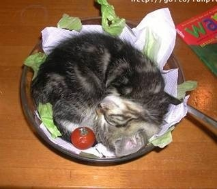 Kitty salad