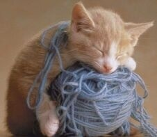 Knitting Kitty