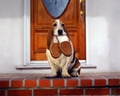 Man's Best Friend - domestic-animals wallpaper