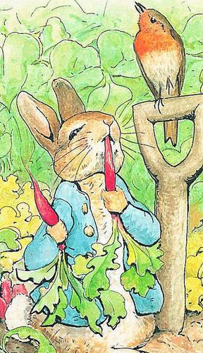 Beatrix Potter wallpaper entitled Peter Rabbit