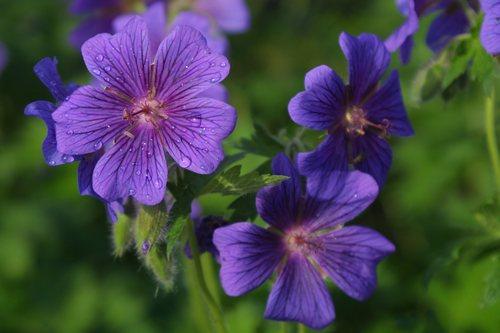 Prettiful Flower!!!