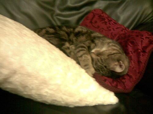 Sleepy Jaspie