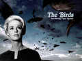 The Birds - alfred-hitchcock wallpaper