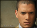 prison break - television wallpaper