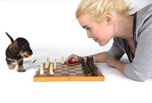 Chess puppy