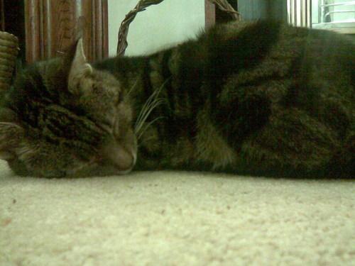 Jasper on the Floor