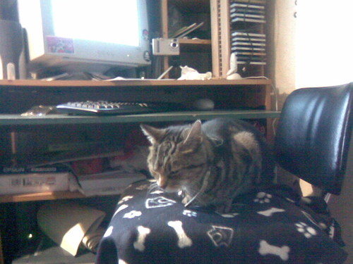 Jasper roubou my chair! :P