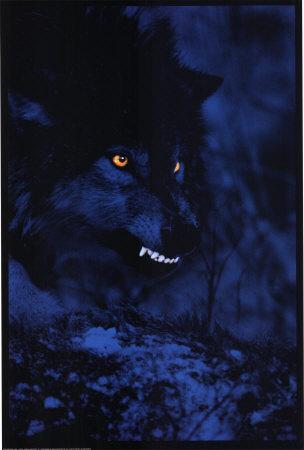 Mad serigala
