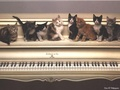 Piano Cats - domestic-animals wallpaper