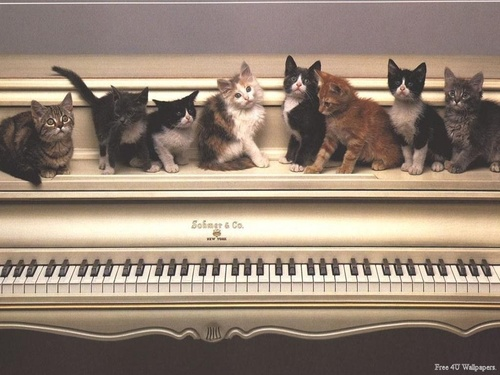 Domestic Animals wallpaper possibly containing a pianist and a piano titled Piano Cats