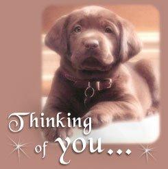 anjing, anak anjing Card