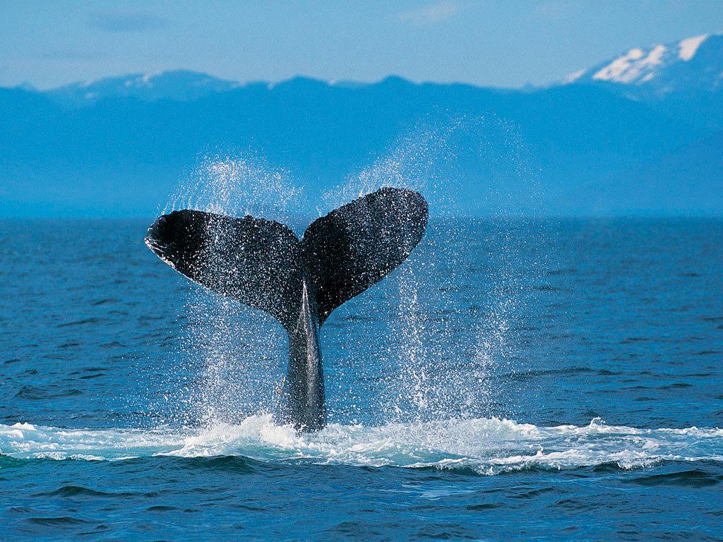 a balena tail