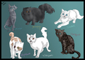 lot of warrior Katzen